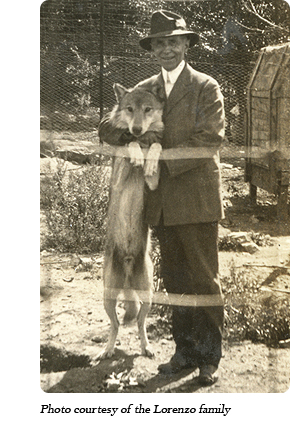 Dr. E. H. McCleery with one of his lobo wolves in Kane, PA