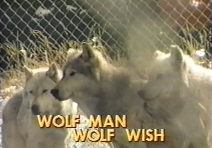 """Wolf Man, Wolf Wish"" Documentary about Jack Lynch and Mary Wheeler's work with Lobo Wolves in Emigrant, MT in 1987"