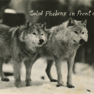 Solid Phalanx in Front of Den [Photograph]