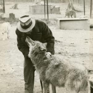 Dr. McCleery Petting a Wolf at the Lobo Wolf Park near Kane [Photograph]