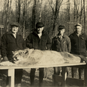 Five Men with a Dead Mountain Lion [Photograph]