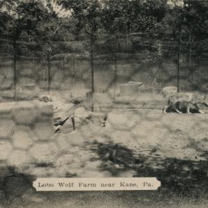 Lobo Wolf Farm near Kane, Pa. [Postcard]