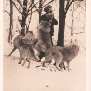McCleery's Lobo and White Arctic Wolves - Kane, Pennsylvania - Earl Jones and Four Wolves [Postcard]