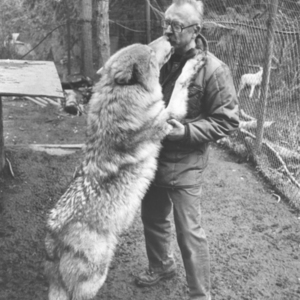 Jack Lynch and a Wolf at Loboland in Gardiner, WA [Photograph]