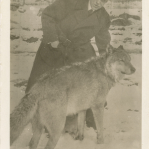 Dr. McCleery With a Wolf at the Lobo Wolf Park in Kane [Postcard]
