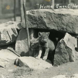 """Home Sweet Home"" [Photograph]"