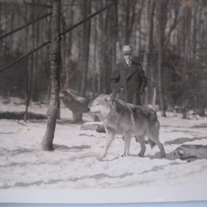Dr. McCleery and Two Wolves at the Lobo Wolf Park near Kane [Photograph]