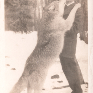 Dr. McCleery with a Wolf at the Lobo Wolf Park [Postcard]
