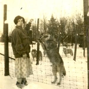 Margaret Jones in Front of the Pens with Four Wolves at the Lobo Wolf Park in Kane [Photograph]