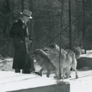 Dr. McCleery in a Pen with Two Wolves at the Lobo Wolf Park near Kane [Photograph]