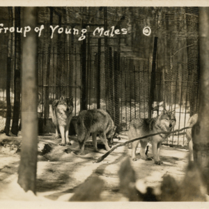 A Group of Young Males [Postcard]