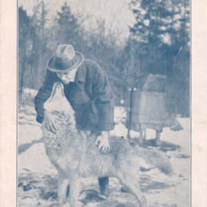 A Friendly 5-Year-Old Wolf. Dr. McCleery's Wolf Pack, Kane, Pa. [Postcard]