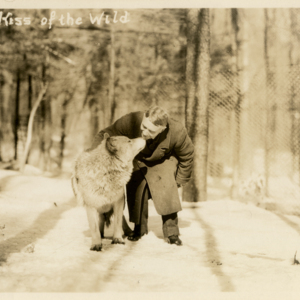 The Kiss of the Wild [Postcard]
