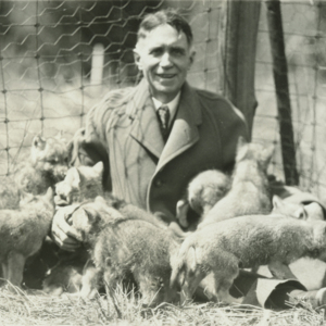 Dr. McCleery in a Pen with Wolf Pups at the Lobo Wolf Park in Kane [Photograph]