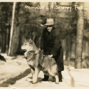 """Romulus"" - A Scrappy Pet [Postcard]"