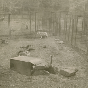 View of the Wolf Pens at the Lobo Wolf Park near Kane [Photograph]