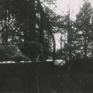 Coyote at the Lobo Wolf Park near Kane [Photograph]