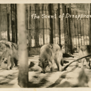 The Scent of Disapproval [Postcard]