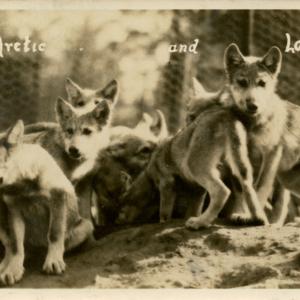 kec2014-postcards004-lobocubs.jpg