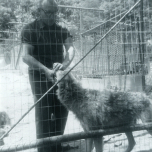 Jack Lynch with a Wolf at the Lobo Wolf Park near Kane [Photograph]